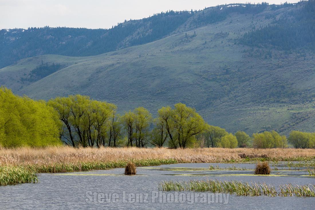 Ladd marsh